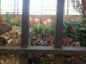 Tulip jail