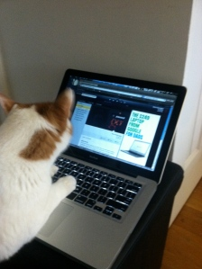 """Kitteh is done with Fun radio. Can we listen to Ne-Yo now?"""""""