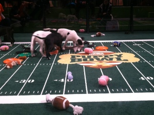 I went to Puppy Bowl Experience! Puppies!