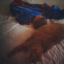 Adam and his cat.