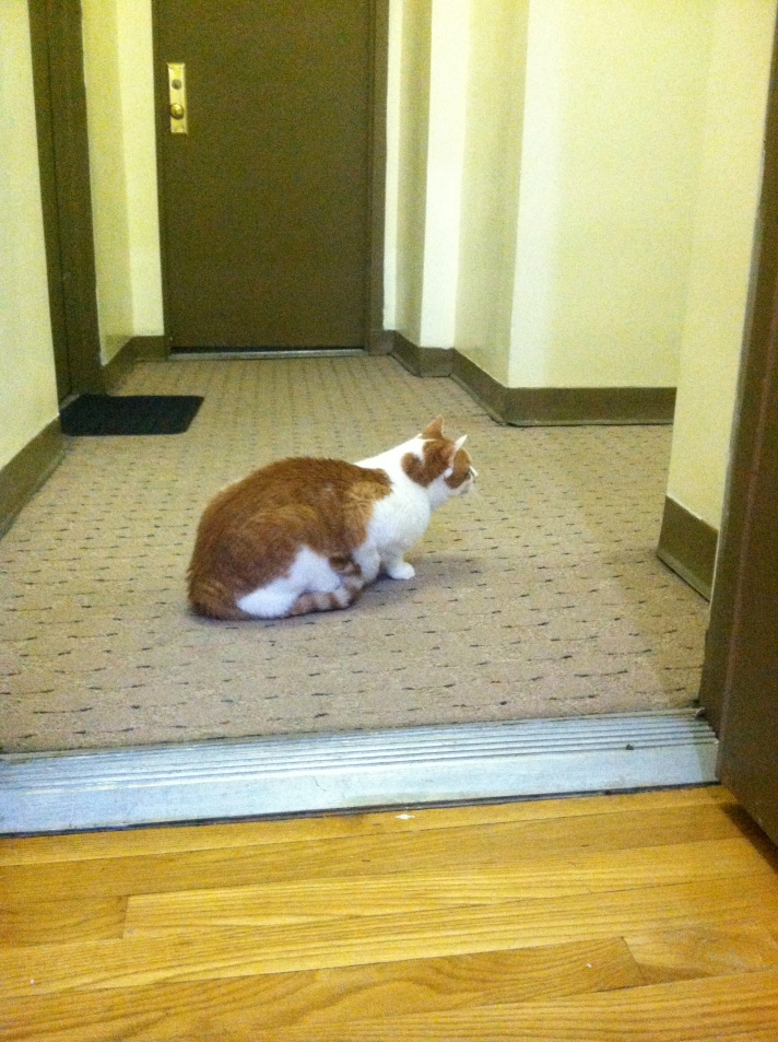 Gatito is like my secret service agent. He checks the hall for threats. *Photo not from today